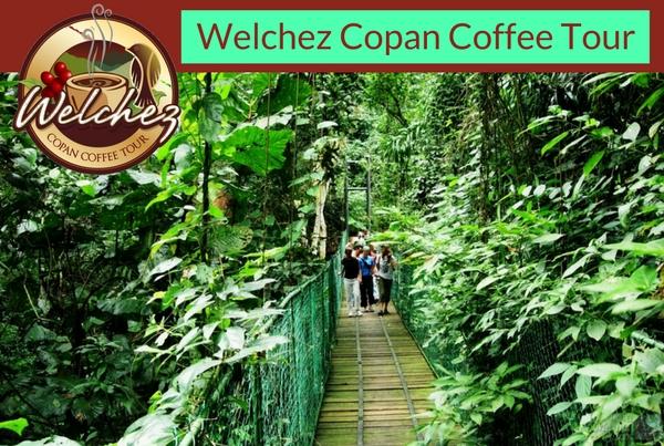 Welchez Copan Coffee Tour